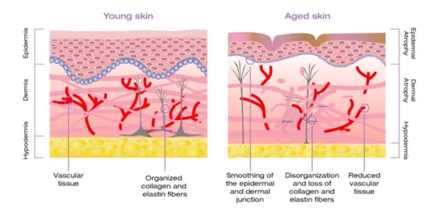 alastin skincare 2